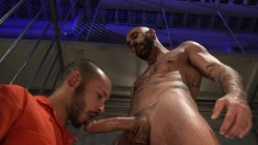 Cocksucking inmate in an orange jumpsuit fists a tattooed stud's ass and swallows his cum